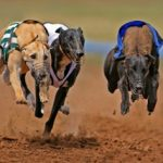 Best Greyhound Betting Offers