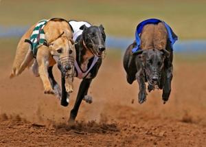 Best Greyhound Betting Offers